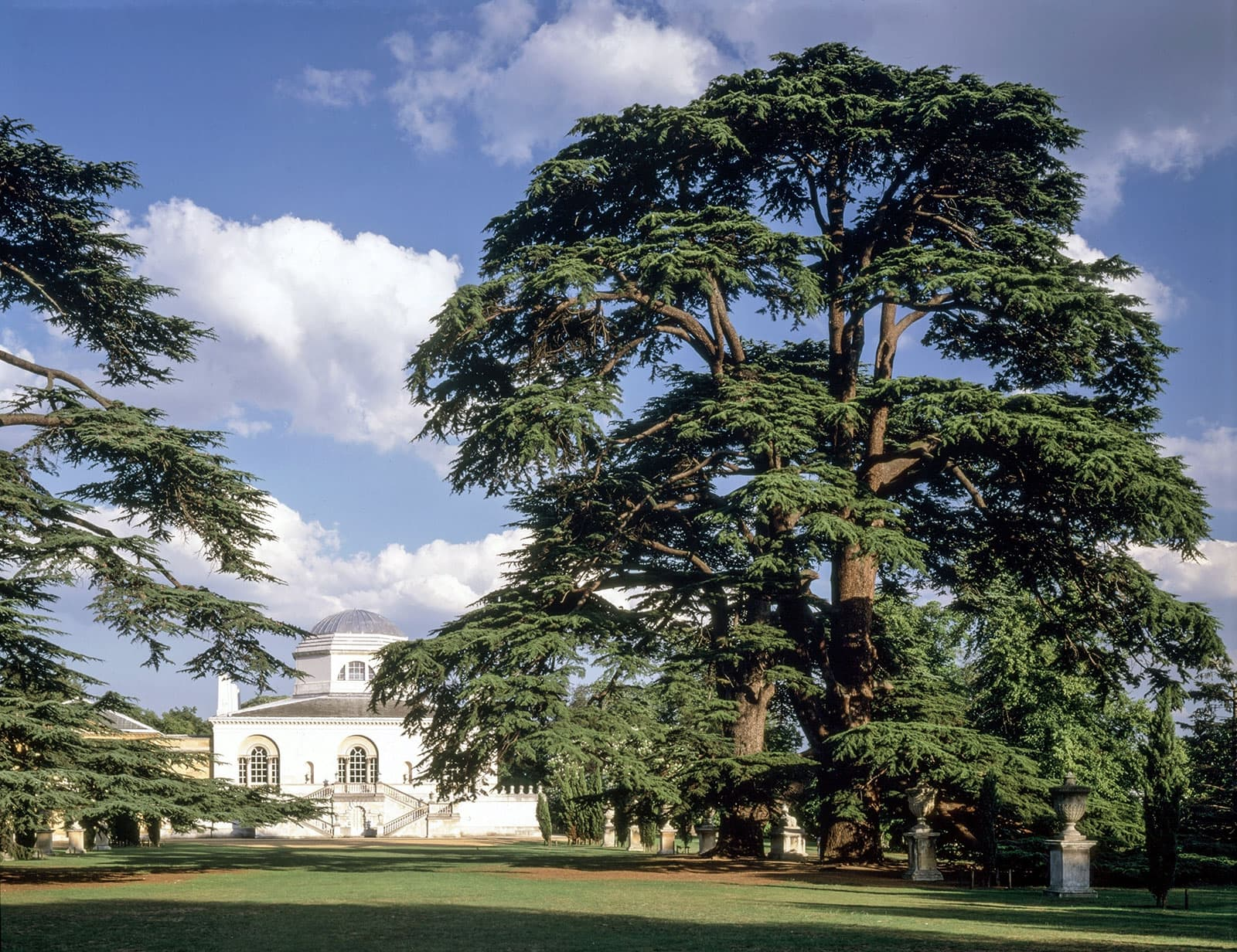 Cedars Of Lebanon ~ Conservation of the famous chiswick house and gardens